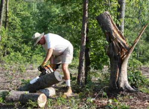 blog-lee-cutting-w-stump-standing