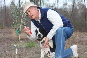 Oddie needed to help me examine one of our olive trees.