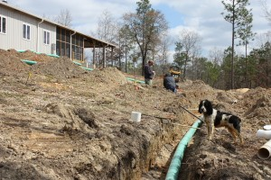 Here you can see the new rainwater harvesting pipes beneath three separate water lines. Good thing Oddie's keeping up with it all for us.